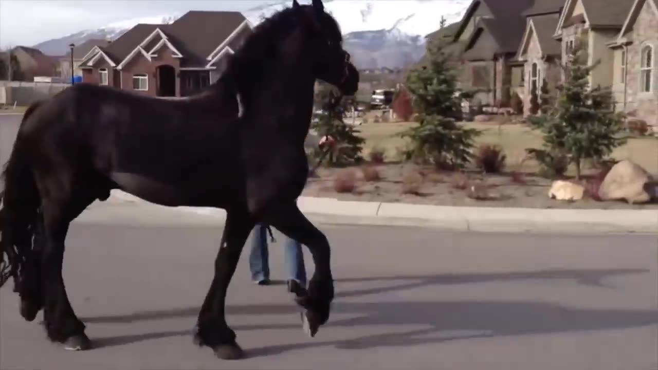 ویدیو جالب ۸ تا از زیباترین اسب های جهان