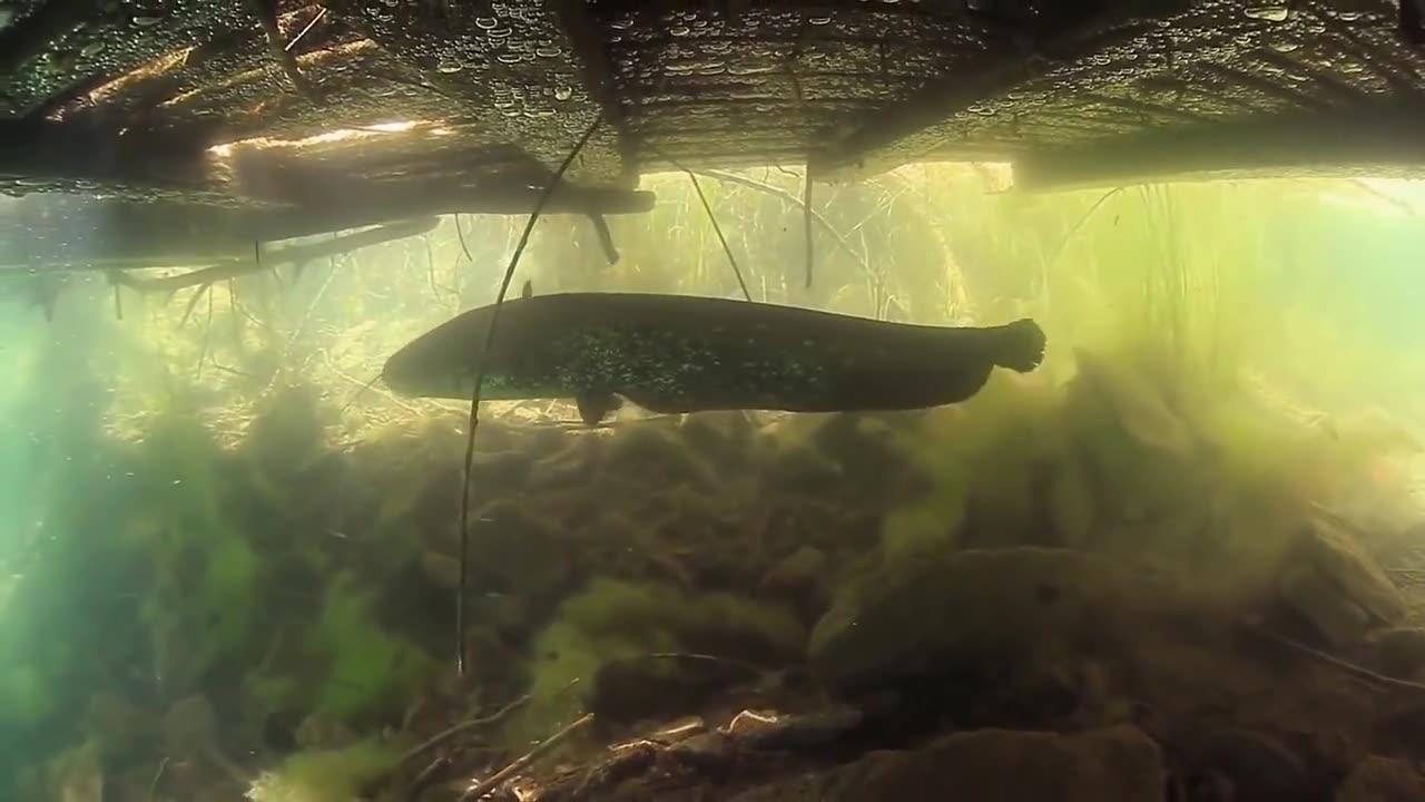 سیلاب های پر برکت: تالاب های کرواسی (مستند)